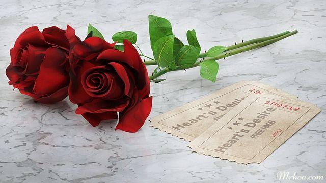 tang hoa sinh nhat