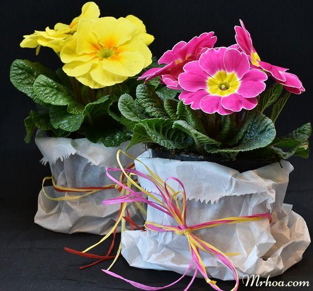 y nghia hoa anh thao