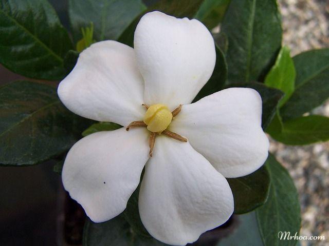 y nghia hoa danh danh 1
