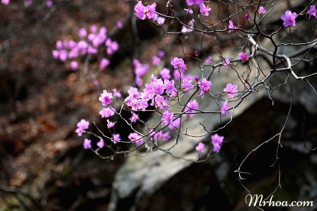y nghia hoa do quyen