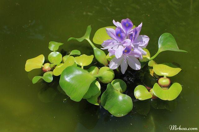 y nghia hoa luc binh