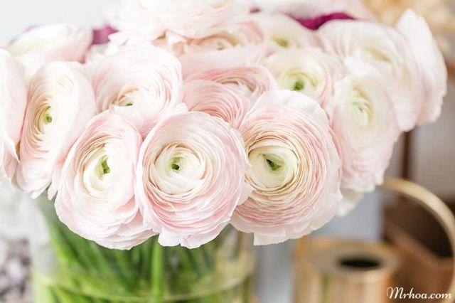 y nghia hoa mao luong