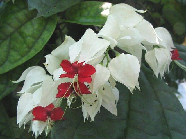 y nghia hoa ngoc nu