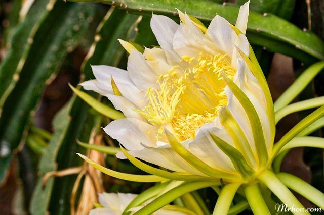 y nghia hoa quynh