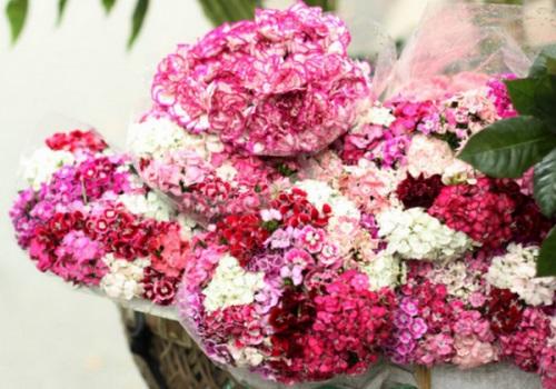hoa pang xe
