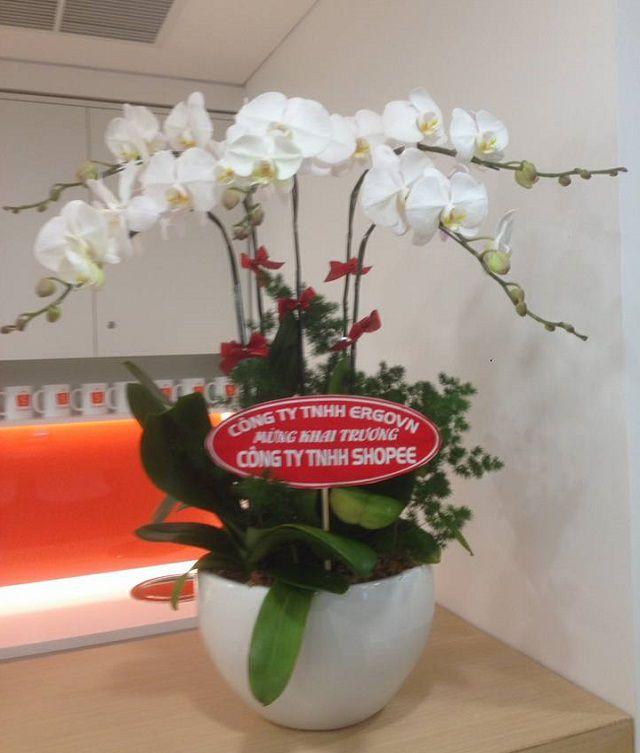 shop lan ho diep bien hoa