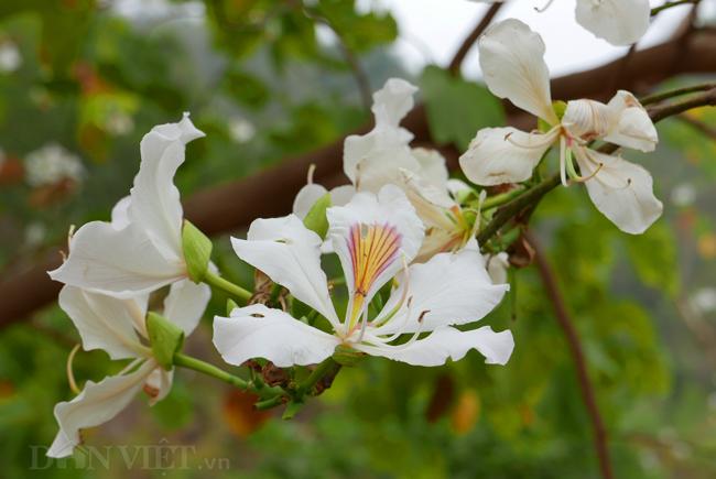 hoa ban dep nhat