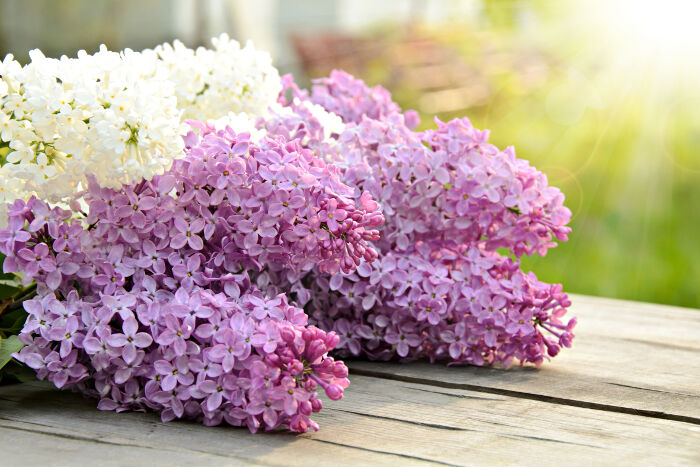 hoa tu dinh huong