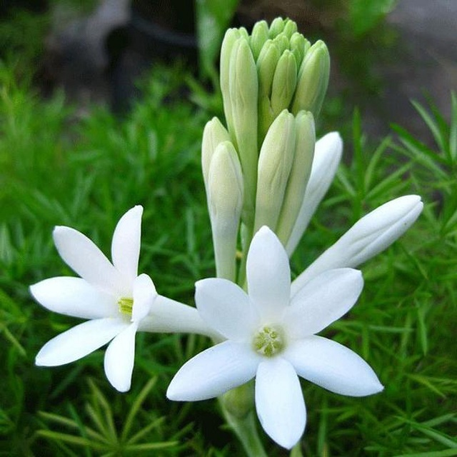 hoa hue