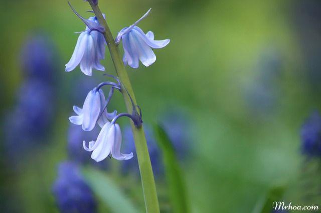 cham soc hoa chuong xanh