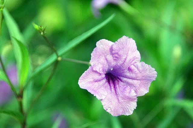 y nghia hoa chieu tim trong phong thuy