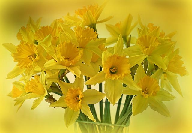 Hoa thủy tiên vàng